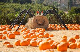 Halloween Farms In Illinois by Best Halloween Activities U0026 Events For Kids In Los Angeles 94 7