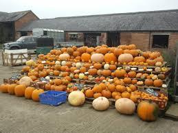 Varieties Of Pumpkins Uk by Oswestry Chickenstreet