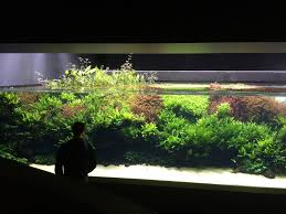 What's Your Favourite Aquascape 2015? | UK Aquatic Plant Society Photo Planted Axolotl Aquascape Tank Caudataorg Suitable Plants Aqua Rebell Tutorial Natures Chaos By James Findley The Making Aquascaping Aquarium Ideas From Aquatics Live 2012 Part 4 Youtube October 2010 Of The Month Ikebana Aquascaping World Public Search Preserveio Need Some Advice On My Planned Aquascape Forum 100 Cave Aquariums And Photography Setup Seriesroot A Tree Animalia Kingdom Show My Our Lovely 28l Continuity Video Gallery Green 90p Iwagumi Rock Garden Page 8