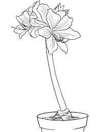 Amaryllis Coloring Pages 6