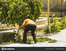 100 Www.home And Garden Er Cutting Trees Branches With Clippers Home And