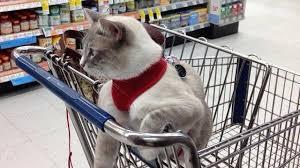 service cats cat seizures