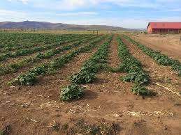 Pumpkin Patch Reno andelin family farm