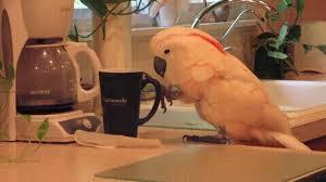 Good Morning Coffee Cups Gifs Tenor