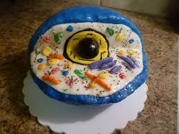 Crazy About Cakes An Edible Animal Cell Model
