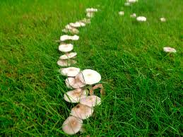 Learn About Marvelous Missouri Mushrooms | Ozarks Living Massive Mushrooms Perennial Garden Lover Soilduck Fanciful Fungi 3 Truffles In Your Backyard Backyards Amazing Edible Plants Scotch Bonnet Lawn Mushroom Youtube Free Images Nature Forest Backyard Leaves Fungus Mushrooms Identify These Back Yard Edible Hunting And How To Grow Get Rid Of The Yard Southern Living Mrgola Murga Morilla O Rabassola Morchella Rotunda Seta Fall For Wild Missouri Department Cservation Stop Bagging Lawn Nonblooming Irises Nh Notes A Diverse Array Naturalis