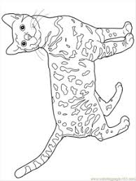Bengal Cats Coloring Pages