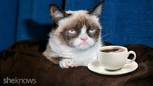 cat coffee coffee company dares to make grumpy cat grumpier than