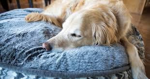 so sieht ein optimaler hundeschlafplatz aus