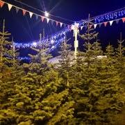 Stanly Lane Napa Pumpkin Patch by Stanly Lane Christmas Trees Christmas Trees 3100 Golden Gate