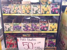 bulbs 50 at the home depot one hundred dollars a month