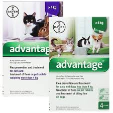flea treatment for cats advantage flea treatment at the lowest prices around vet medic