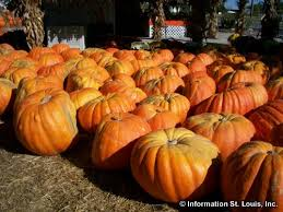 Pumpkin Patches Maryland Heights Mo by Halloween In St Louis Missouri