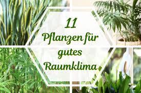 11 pflanzen für gutes raumklima und luftfeuchtigkeit