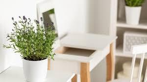 zimmerpflanzen tipps die besten pflanzen für die wohnung