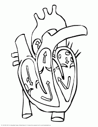 Human Heart Coloring Pages 10 Page