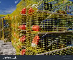 Decorative Lobster Trap Buoys by New Yellow Lobster Traps New Lobster Stock Photo 105652763