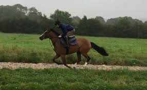 100 Canford Cliffs Canfordcliffsgallops Richard Phillips Racing