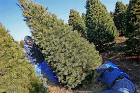 Christmas Tree Preservative Spray by December Gardening Calendar Try A Live Christmas Tree