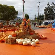 Morgan Hill California Pumpkin Patch by Pick Of The Patch Pumpkins U0026 Abc Tree Farms 31 Photos U0026 16