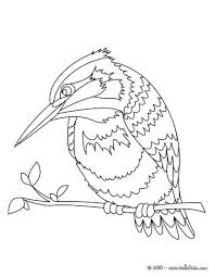 Common Kingfisher Coloring Page
