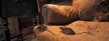 au canada plus d un millier de souris saisies dans une maison