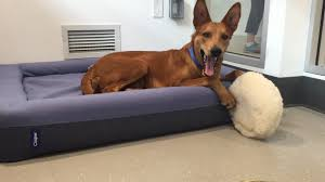 The Dogs at Animal Haven Each Have a New Bed Casper Blog