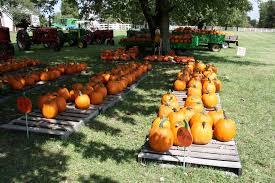 Southern Illinois Pumpkin Patches by Johnson County Illinois Mapio Net
