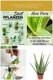 luftverbesserer diese pflanzen sind perfekt für deine