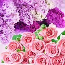 Rose & Violet Type Scent Natures Garden Fragrance Oils