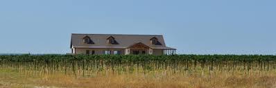 Texas Wine Pilot Knob Vineyard