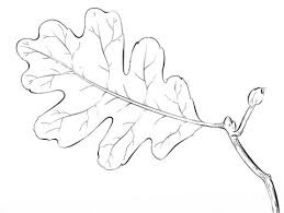 How To Draw A Simple Leaf Coloring Pages For Kids Oak Tree Page