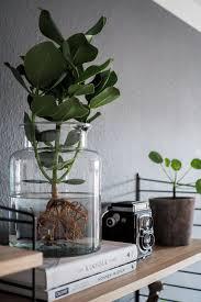 water plants der neue pflanzentrend pflegeleichte