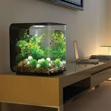 idées et astuces comment créer un nano aquarium petit aquarium