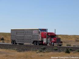 Peterbilt 379 For John Alps Trucking | Peterbilt 379 With Bu… | Flickr Semi Hauling Cattle Overturns On I15 Smashing Onto Car With 3 The Worlds Most Recently Posted Photos Of Hauler And Livestock These Are People Who Haul Our Food Across America Salt Npr No 11 Jbs Carriers Beef Central Kenworth Custom W900l Bull Bad Ass Semi Pinterest Blhauler Manners Brigshots Best Photos Flickr Hive Mind Mf Western Toy Kids Bull Hauler Truck Peterbilt Child 2 Pk 10 Top Paying Driving Specialties For Commercial Drivers Norstar Beds Iron Trailers Livestock Groups Seek Waiver From Trucking Rules Feedstuffs Cattle Pots Home Facebook
