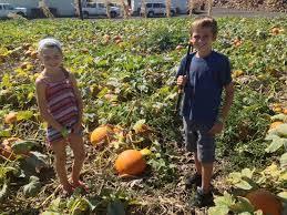 Pumpkin Patch Pasadena by Five Best Pumpkin Patches In Orange County Oc Mom Blog