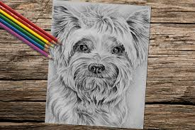Yorkie Dog Coloring Book Page Adult