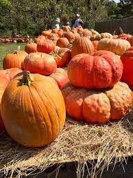 West Produce Pumpkin Patch Fayetteville Nc by Vanzant Fruit Farms Home Facebook