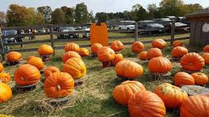 Pumpkin Picking In Ct by Pumpkin Picking At Jones Family Farms U2013 A Fall Tradition