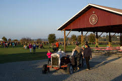 Swan Farms Snohomish Pumpkin Patch by Pumpkin Patch Farm Editorial Stock Photo Image 34411428