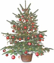 Christmas Tree Aphids by From Seedling To Maturity The Life Of A Christmas Tree Sparta