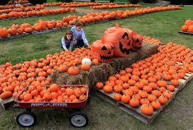 Pumpkin Patch Columbus 2015 by Summerville United Methodist Is Prepared For Pumpkin Season