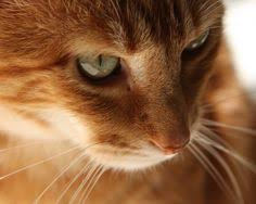 orange cat names and orange cat phew that s quite a list of