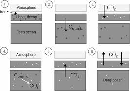 Define The Word Carbon Sink by Sequestration In The Oceans The Carbon Dioxide Dilemma