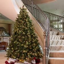 3ft Christmas Tree Pre Lit by 12 Ft Carolina Pine Full Pre Lit Christmas Tree Hayneedle