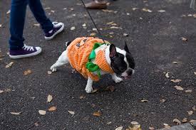Tompkins Square Halloween Dog Parade by Tompkins Square Park Halloween Dog Parade Tompkins Square Park