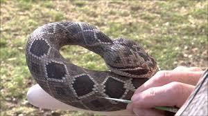 the making of wood carved rattlesnake walking cane 43 youtube