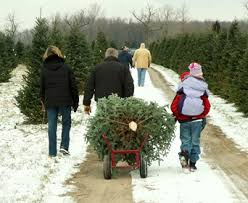 Christmas Tree Preservative Recipe Sugar by Skip The Sugar Water Best Care For Christmas Trees Davey Blog