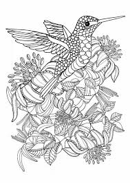 Hummingbird Printable Coloring Pages Digital By TangledPeacock