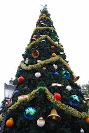Publix Christmas Trees 2014 by Christmas At Walt Disney World
